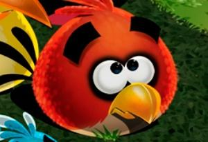 Save the Angry Bird