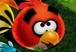 Save the Angry Bird