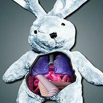 rabbit-surgery
